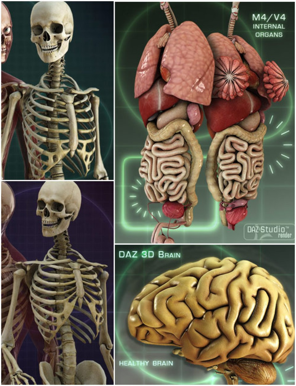 Anatomy Starter Bundle